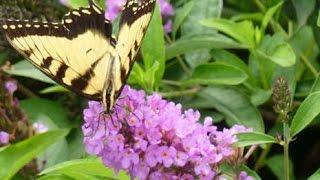 Butterfly Garden Plants