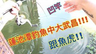高雄蓮池潭釣魚中大武昌跟魚虎 | Fishing in KaoHsiung Taiwan Lotus Pond