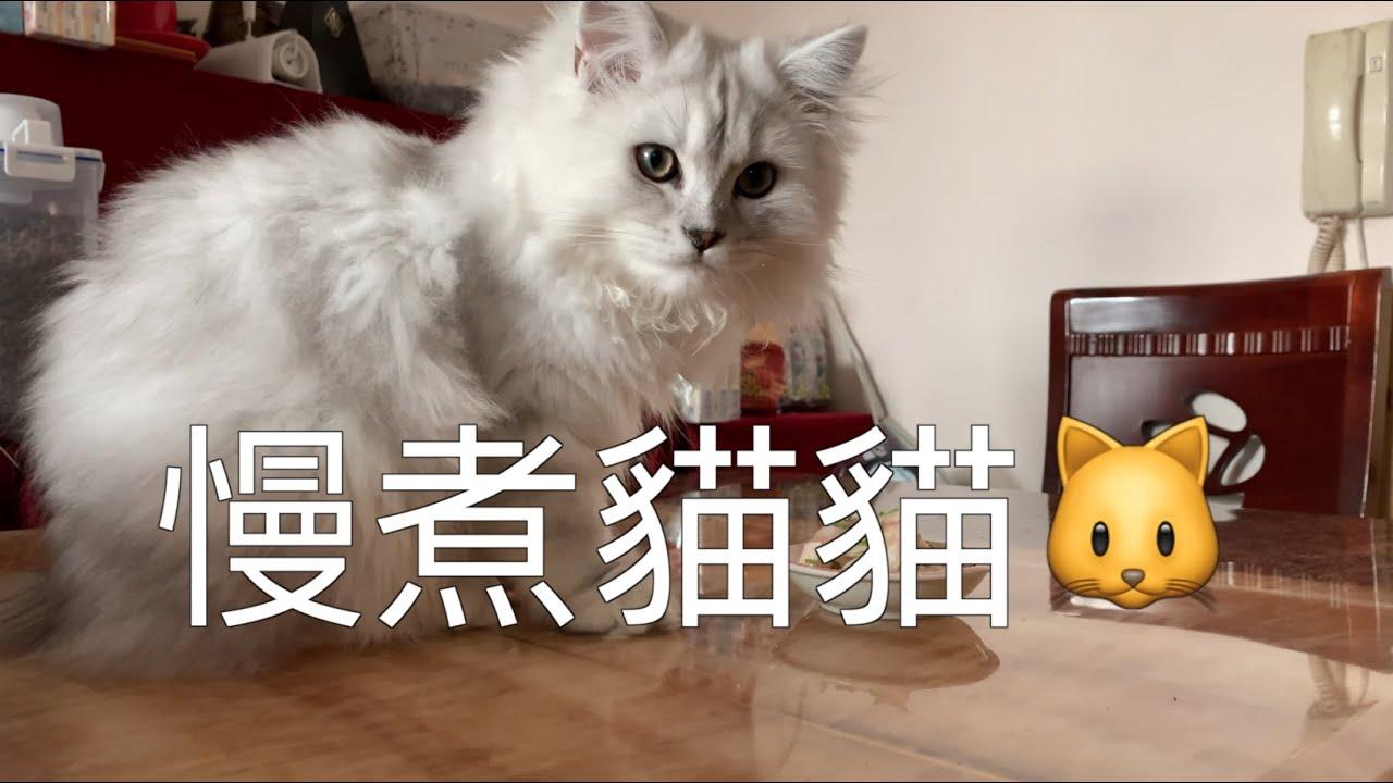 「搞邊科?」慢煮貓食(鱈魚柳+雞柳+小麥草) - YouTube