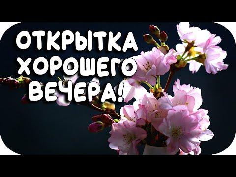Добрый вечер! САМАЯ КРАСИВАЯ ОТКРЫТКА С ДОБРЫМ ВЕЧЕРОМ! Хорошего вечера!(2020)