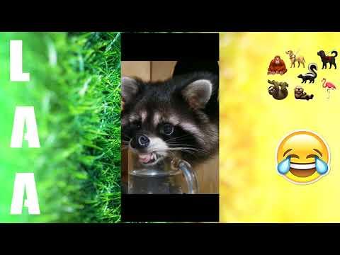 Best Funny Pet Videos – Curious – Short Hilarious clip 😂