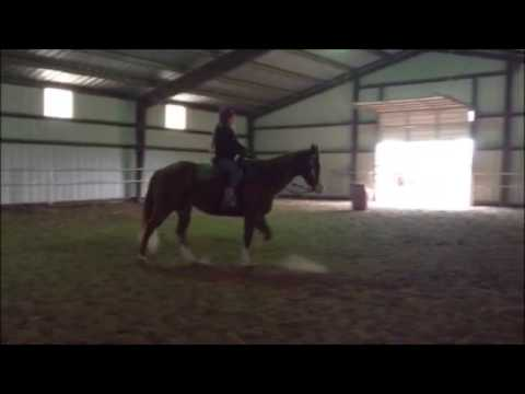 Broke Big Stout Sorrel Quarter Horse Gelding