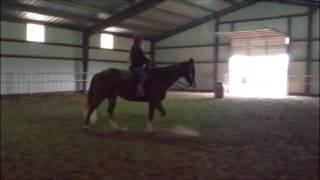 Broke Big Stout Sorrel Quarter Horse Gelding