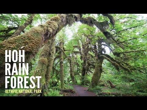 Hoh Rain Forest: Trail of Mosses - Travel Photography