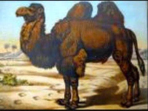 Dingo - Kunnian Kentät