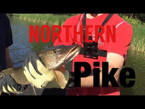 Lake Pittock NORTHERN PIKE and BIG LARGEMOUTHS