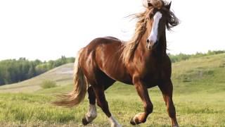 Лошади - самые величественные животные! Животные для детей и малышей.