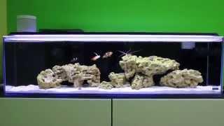 Mr Aqua 12 Gallon Long Nano Reef Saltwater Aquarium - The Beginning (5 Months)