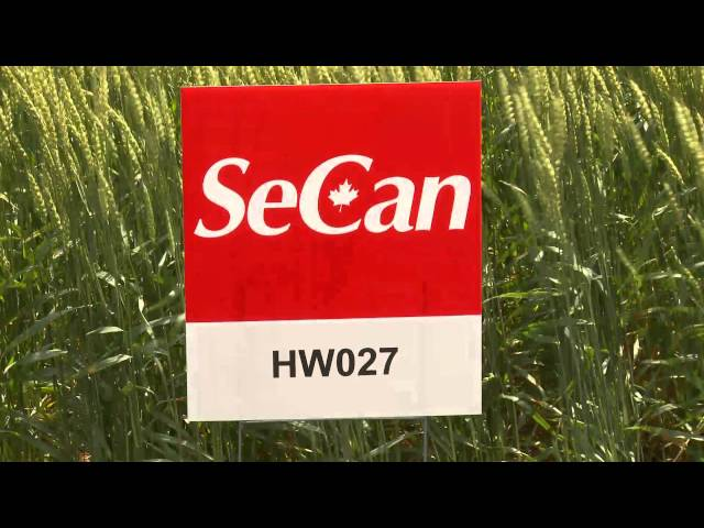 SeCan HW027 hard white wheat Travel Video