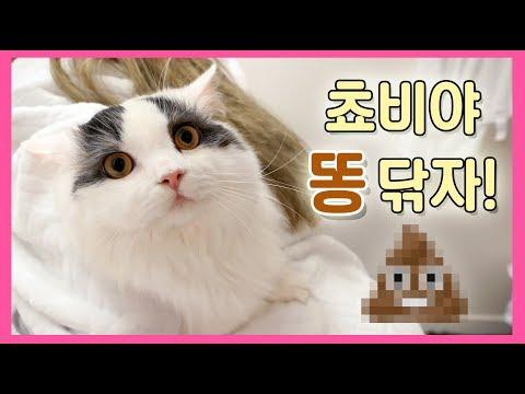 쵸비야 똥 닦자! 흔한 고양이 집사의 일상