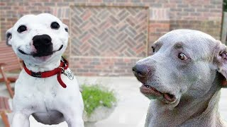 Funniest Dog Compilation That Will Make Your Day!