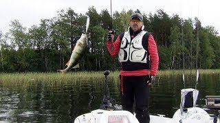 Утренняя рыбалка - легкий твичинг и подбор воблеров