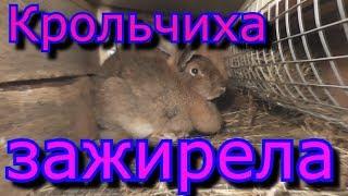Крольчиха зажирела и не идёт в случку Причина Какой выход из данной ситуации