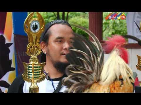 KAKI ( KOMUNITAS AYAM KATE INDONESIA )
