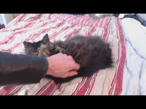 The Case of the Very Cuddly Gizmo Cat