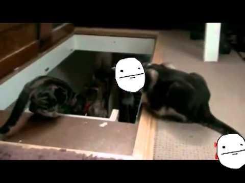 hqdefault the troll cat [meme faces version] youtube