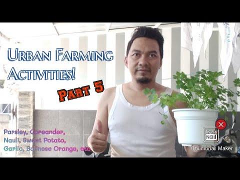 my-urban-farming-activities-part-5-week-#2-june-2020