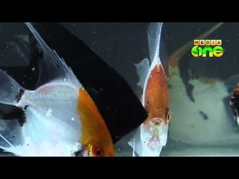 Njatuvela Agricultural awareness - Ornamental Fish Farming | (Part 01, Episode 25)
