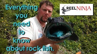 Everything You Need To Know About Ling Cod and Rock Fishing
