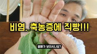 비염, 축농증에 특효인 약초!