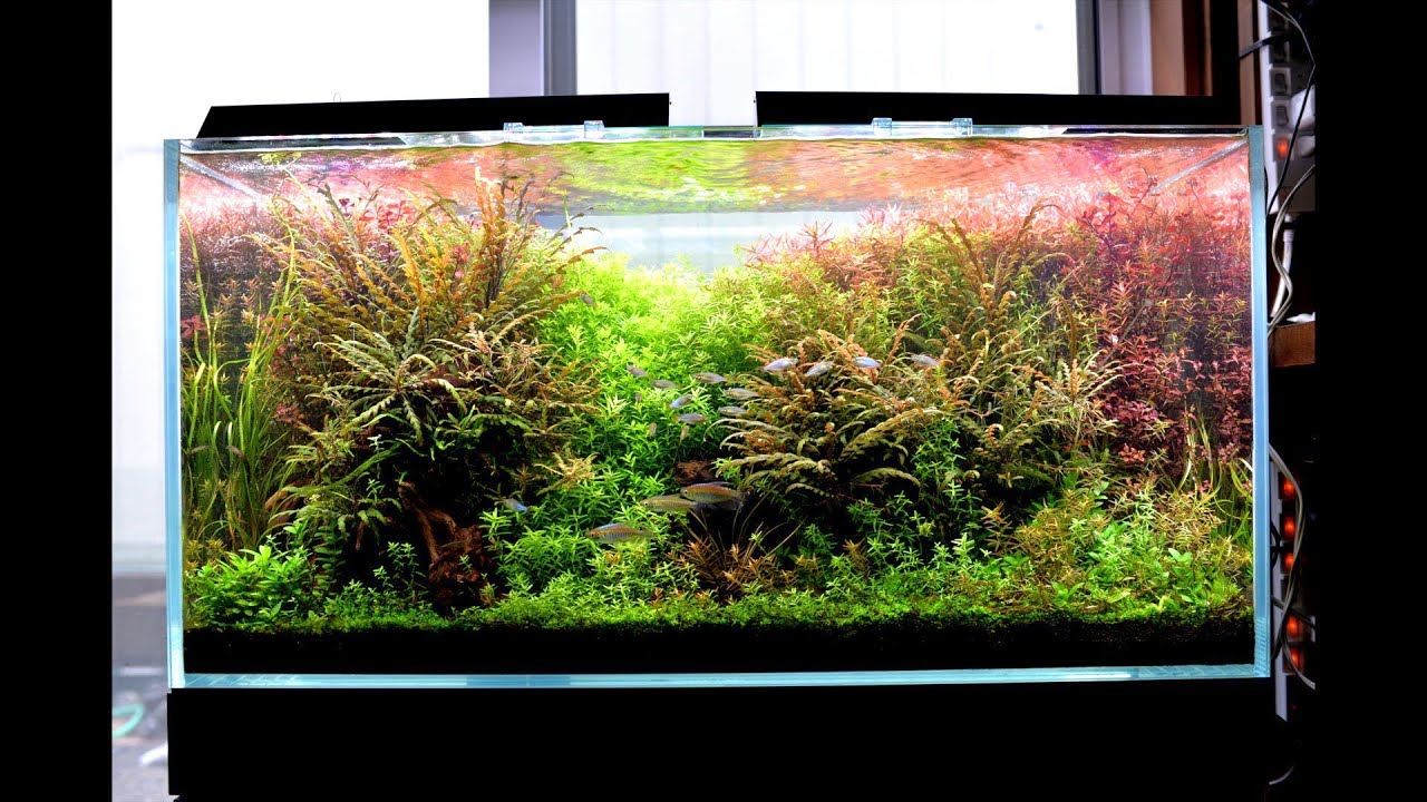 Beautiful memories of aquatic plants  アクアリウム 美しき思い出「自分用」90センチ水槽