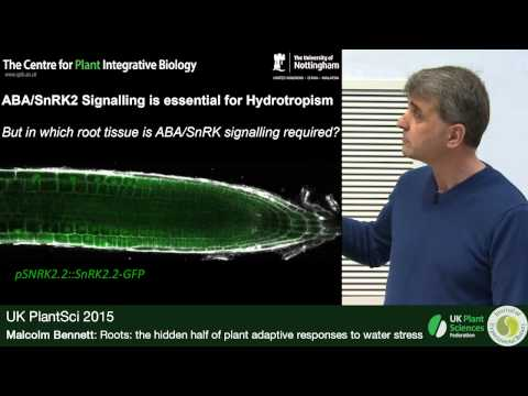 Malcolm Bennett. Roots: The Hidden Half Of Plant Adaptive Responses To Water Stress