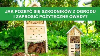Jak pozbyć się szkodników z ogrodu i zaprosić pożyteczne owady? - ZIEMOVIT - Niech żyje ogród!