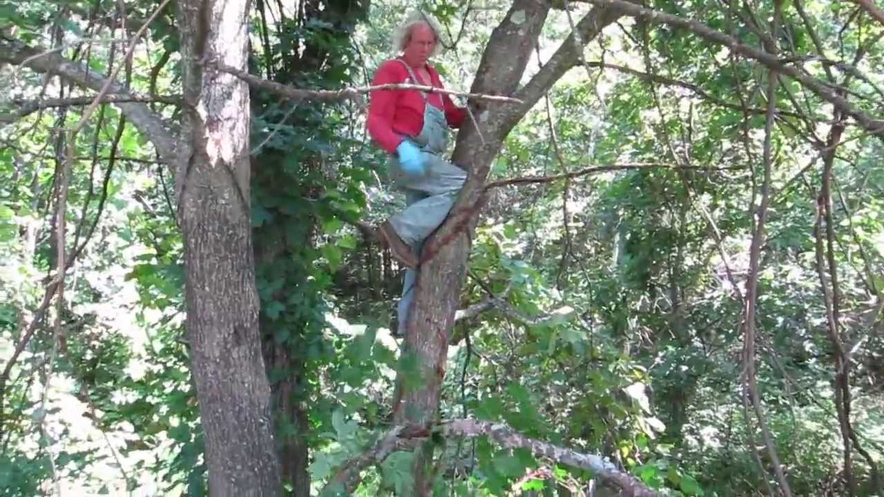 Removing Poison Ivy Vine From A Tree Part Ii
