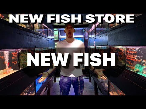 TRYING A NEW PET STORE Coming Home With A ROPEFISH