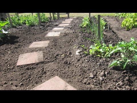 DIY Project Garden Walkway