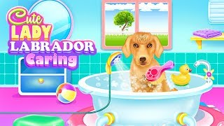 Cute Lady Labrador Caring - Puppy Care Dog Grooming