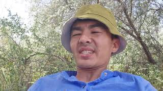 Рыбалка на Сырдарья село Бозай сазан сом 2021г