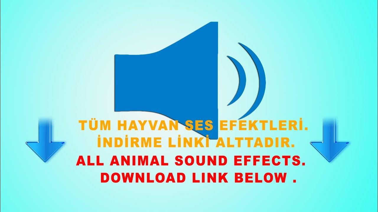Turkey sound mp3 download.