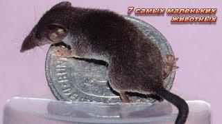 7 самых маленьких животных