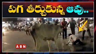 Cow Takes Revenge On Riksha Owner At Bus stand | Machalipatnam | ABN Telugu