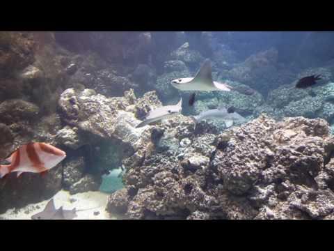 Omaha zoo aquarium 1