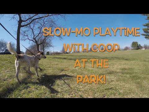 Cute Dog Slow-Mo Playtime at the Park