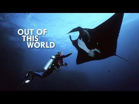 Manta Rays are Flat Sharks