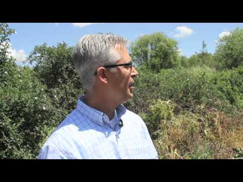 Noxious Weeds in Idaho