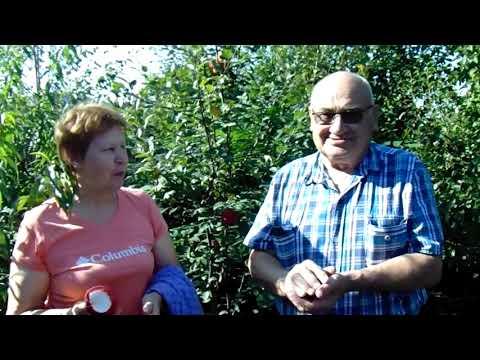 Яблоня Квинти — адаптация к Сибири- по Железову.