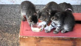 Дружба котов и мышей на Сардинии 1