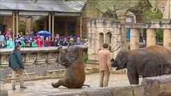 Im Hannoveraner Zoo werden Elefantenkinder malträtiert | Report Mainz | Das Erste