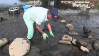 大村の風物詩 「うなぎ塚漁」を訪ねて