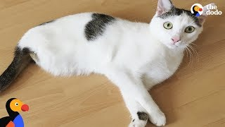 Energetic Cat Missing 2 Legs Loves His New Family So Much | The Dodo