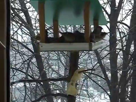 Птицы у кормушки