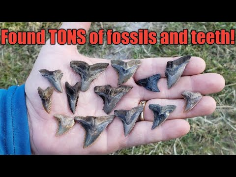 Peace River Florida Tributary Fossil Hunting |secret Creek| FOUND LOADS OF FOSSILS!