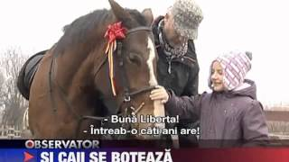 Stiri Antena 1 NanaFarm   HorsesLand ro