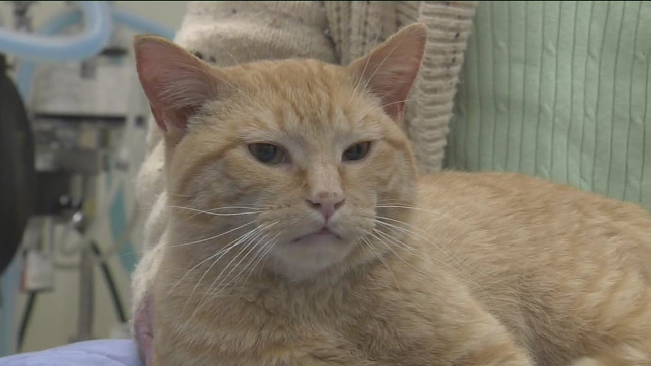 Abused cat saved by Kenosha pet rehab group on the road to recovery
