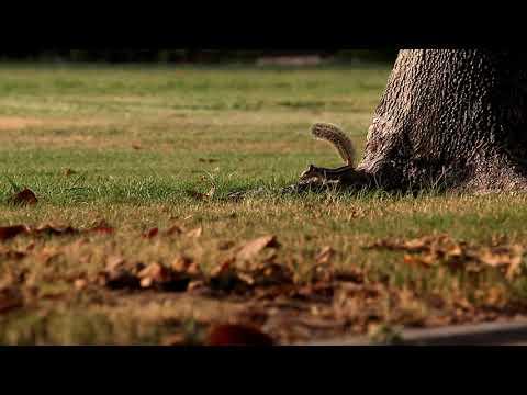 Squirrels – Al Safa Park Dubai