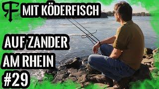 So wird`s gemacht Zanderangeln am Rhein mit dem toten Köderfisch# Online Guiding Part# 10